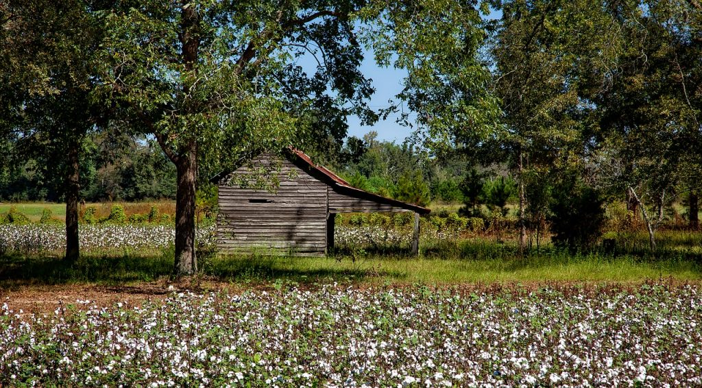 Baumwollfarm eines Kleinbauern in Alabama, USA.