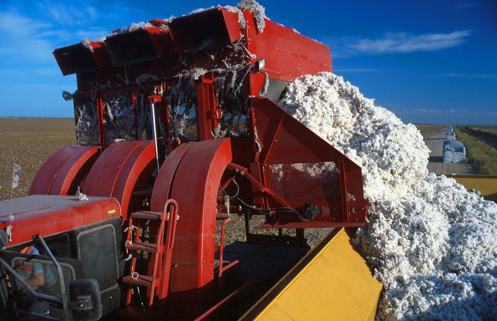 Maschinelle Baumwollernte Cotton Landwirtschaft Farm Bauernhof