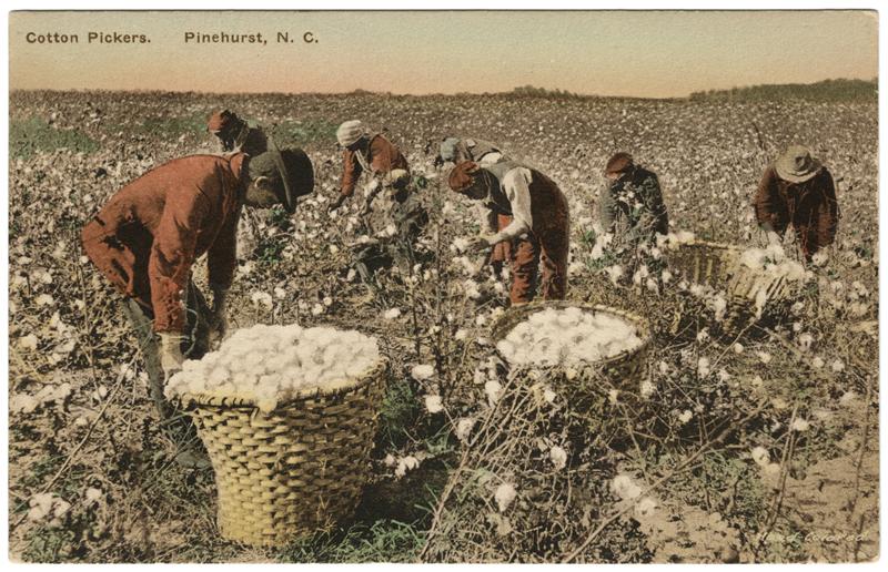 Baumwollpflücker in Pinehurst, ener Stadt in North Carolina.