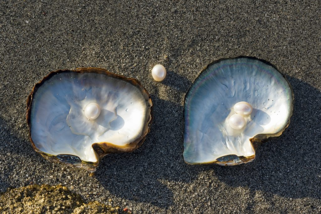 Muschel von innen mit Perlen in weiß