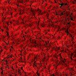 rot-rosen-liebe-romantik