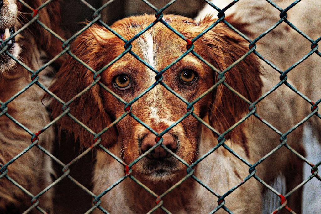 Hund im Tierheim