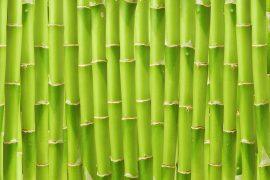 Nahaufnahme von Bambusstängeln